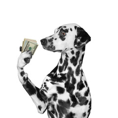 Dog holding in its paws a lot of money
