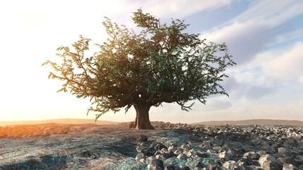 A single tree left in a desert rock landscape conceptual background