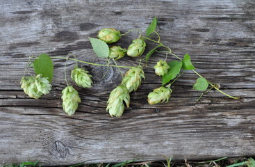 Green Hops and Leaves on the Old Grey Board