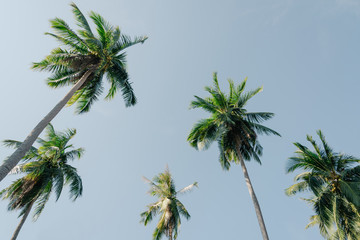 coconut palm tree on blue sky with vintage effect