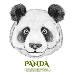 Panda portrait, cute panda head