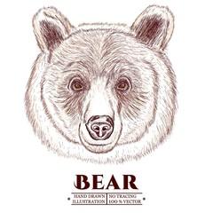 Portrait of a bear, head of a brown bear hand drawn