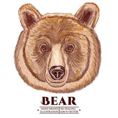 Portrait of a bear, head of a brown bear