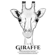 Giraffe realistic portrait sketch vector isolated on white