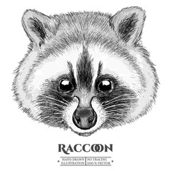 Raccoon realistic portrait hand drawn vector