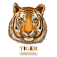 Tiger realistic portrait vector