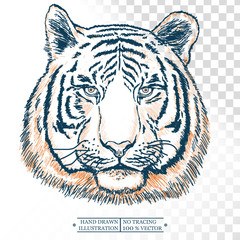Tiger portrait isolated on white hand drawn vector