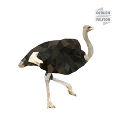 Ostrich polygon vector