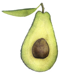 watercolor sketch of an avocado on a white background