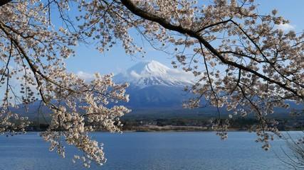 Wall Mural - Mt.Fuji and Cherry Blossom at lake Kawaguchiko,Yamanashi,Japan