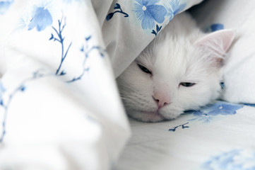 The white cat is sleeping in bed