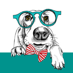 The image dog Basset Hound portrait in the glasses and with bow. Vector illustration.