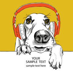 The image dog Basset Hound portrait in the headphones. Vector illustration.