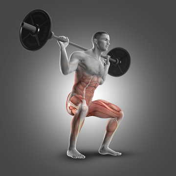 3D male figure in barbell squat