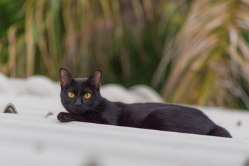 Black color cat