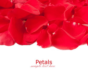 Red roses petals isolated on white