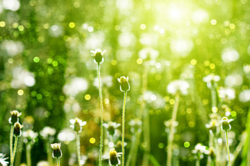 flower grass and sun light.