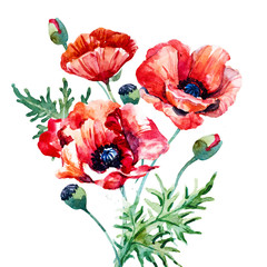 Watercolor poppy composition