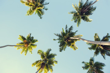 Wall Mural - Coconut palms against the blue sky.  Low Angle View. Toned image