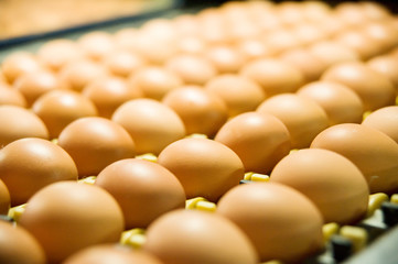 Eggs on the production line