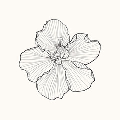 Hibiscus flower top view line pattern.