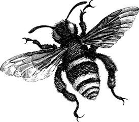Vintage drawing bee