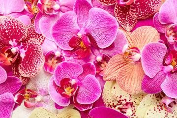 Obraz Orchid flowers - fototapety do salonu