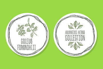 Ayurvedic Herb - Product Label with Coleus forskohlii