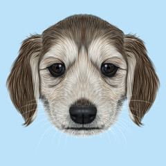 Illustrated Portrait of Afghan Hound puppy.