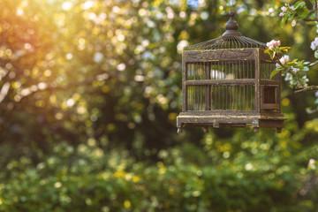 Edwardian Birdcage