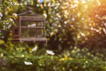 Birdcage In Spring