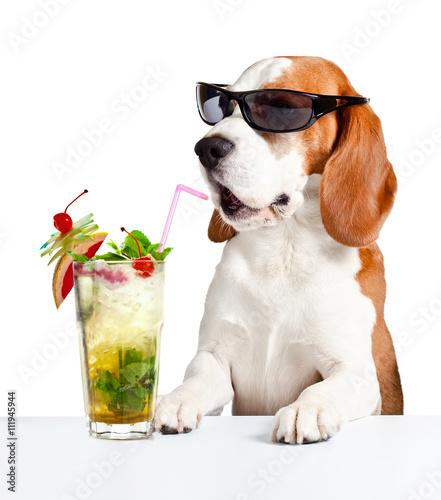 Певец собака юмор очки  № 1527450 загрузить
