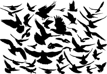 Vector set of silhouettes of 40 flying birds