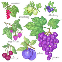 Set of vector images of fruit and berries.