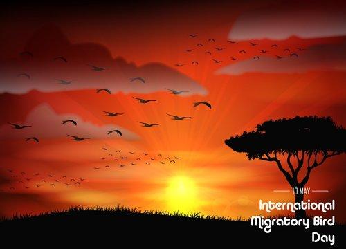 Birds migratory day on sunset background