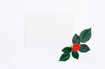 One roses and a blank white card