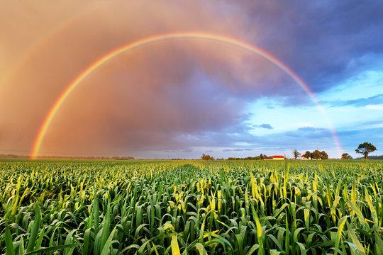 Rainbow over wheat field, nature landscape