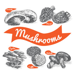Vector illustrated Set #1 of Mushrooms. Illustrative sorts of mushrooms
