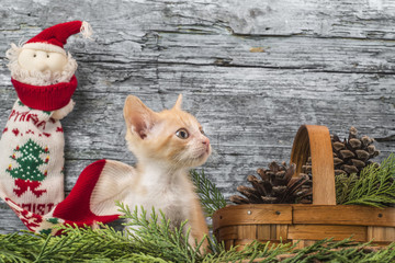 Kitten in Christmas decoration