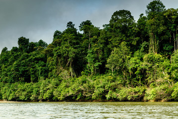 scenery of the forest from the river Sungai tembeling inside the forest of Taman Negara in Malaysia