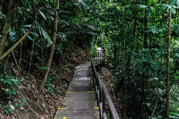wooden way inside the forest of Taman Negara in Malaysia