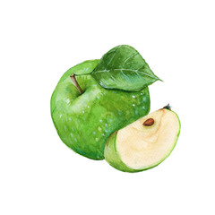 green apple. isolated. watercolor illustration