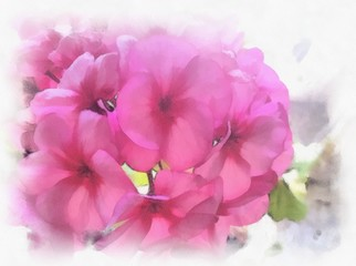 Watercolor flowers geraniums. Beautiful watercolor background for your website, banners, covers or other printed materials