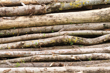 Old Wood stack with trunks, Can be used as background. Photo.