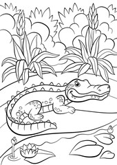 Coloring pages. Animals. Little cute alligator sits near the pond.