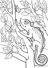 Coloring pages. Wild animals. Little cute chameleon looks at the fly.