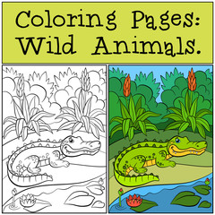 Coloring Pages: Wild Animals. Little cute alligator.