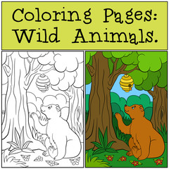 Coloring Pages: Wild Animals. Cute bear looks at the beehive.