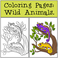 Coloring Pages: Wild Animals. Two little cute chameleons sits on the tree branch.