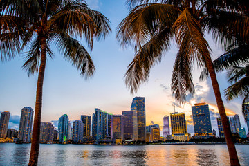 Acrylic Prints United States Miami, Florida skyline and bay at sunset seen through palm trees